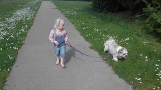 How To Introduce Leash Walking Your Lhasa Apso